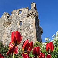 17th century Scalloway Castle, tower house in Scalloway on the Mainland, Shetland Islands, Scotland, UK