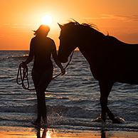 Horsewoman / female horse rider leaving the water with horse on the beach at sunset along the North Sea coast
