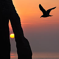 Silhouette of seagull and the Porte D'Aval, a natural arch in the chalk cliffs at Etretat at sunset, Côte d'Albâtre, Upper Normandy, France <BR><BR>More images at www.arterra.be</P>
