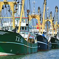 Trawler fishing boats in the harbour of Oudeschild, Texel, the Netherlands